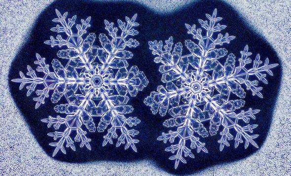 Snowflake4-master1050