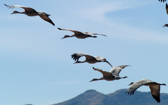 diagonal crane flight.jpg