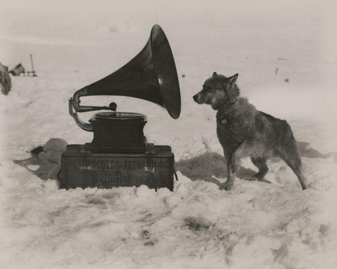 Captain Robert Scott's Dog, Chris1911.jpg