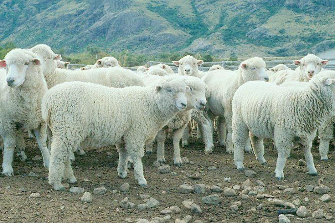 herd instinct.jpg