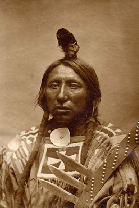 spotted eagle.jpg